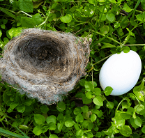 Empty Nesters Need to Protect Their Nest Eggs