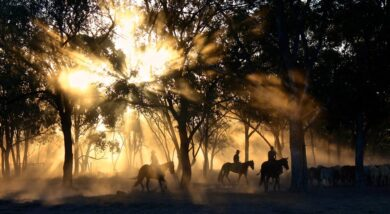Horse Ownership and You: Investing in Your Passions